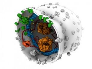 Cercetătorii dezvoltă noi metode de construcție a celulelor sintetice