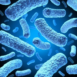 Cum pot bacteriile chlamydia să se răspândească în organismul uman?