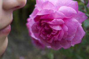 Noi cercetări dezvăluie impactul pierderii mirosului