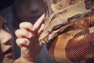 Sursa cea mai probabilă de infecție cu Coronavirus din China este șarpele