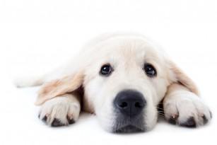 Mușcătura de câine - recomandări medicale