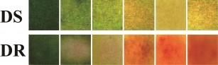 Un nou bandaj care își schimbă culoarea in funcție de bacterii, administrând tratamentul corespunzător