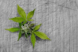 Consumul de marijuana la tată poate influența structura creierului urmașilor