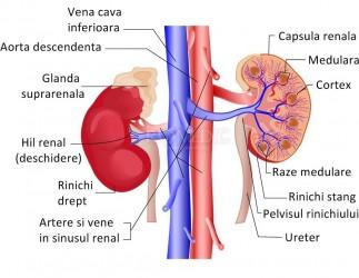Funcție renală anormală - explicații