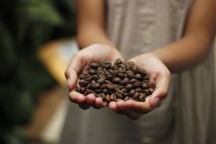 Noi descoperiri despre substanța care dă cafelei gustul amar