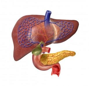 Glicogenul - metabolism și patologii asociate