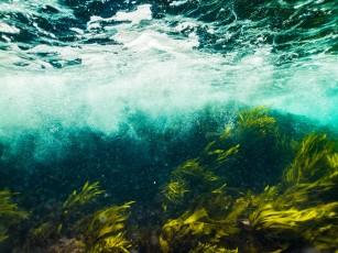 tratament comun cu alge marine)