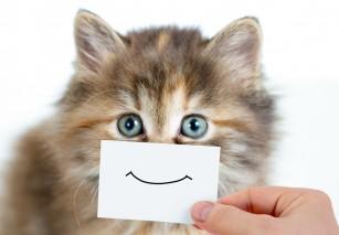 Mai multe pisici decât se cunoștea anterior ar putea fi infectate cu SARS-COV-2