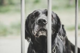 Mușcătura de câine - ce trebuie să știi