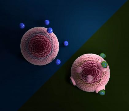 Pătrunderea microplasticelor în celulele vii