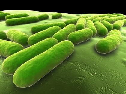 Clasă nouă de antibiotice eficientă împotriva unei game variate de bacterii