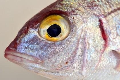 Consumul a două porții de pește pe săptămână poate ajuta la prevenirea bolilor cardiace recurente