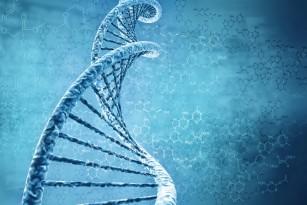 Forma feței și a creierului, influențate de genetică