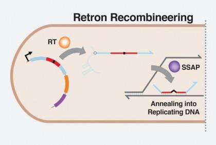 Retronii în competiţie cu tehnica CRISPR