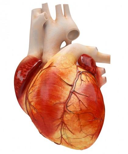 Grăsimea din jurul inimii este asociată cu un risc crescut de insuficienţă cardiacă