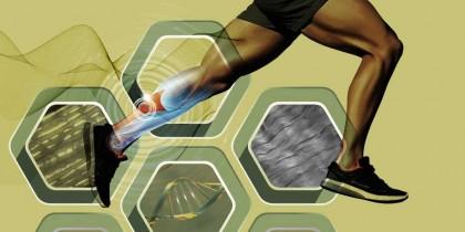 Cum devin tendoanele mai rigide și mai puternice
