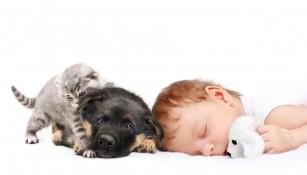 Copiii care dorm cu animalul de companie pot avea un somn odihnitor