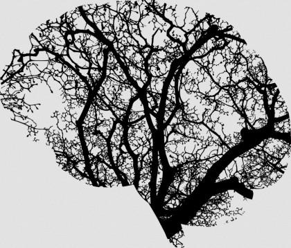 Un nou studiu a demonstrat rolul calciului în direcționarea sângelui către creier
