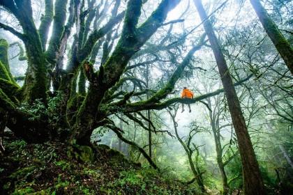 Locuirea lângă zone împădurite este bună pentru sănătatea mintală a copiilor și a adolescenților