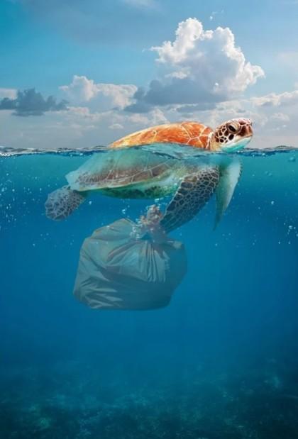 Plasticul - calul troian al lumii marine