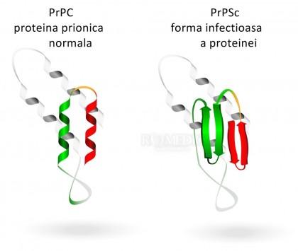 Prionii - ce sunt prionii şi cum afectează ei organismul