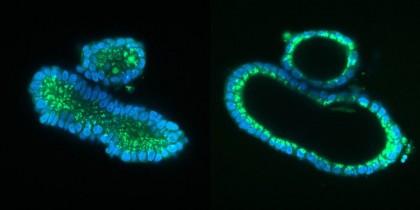 O nouă tehnică de modificare a ADN-ului, mai sigură decât tehnica convențională CRISPR