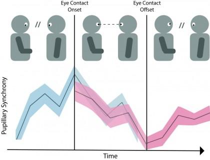 Contactul vizual poate face conversația mai atrăgătoare, sugerează un studiu