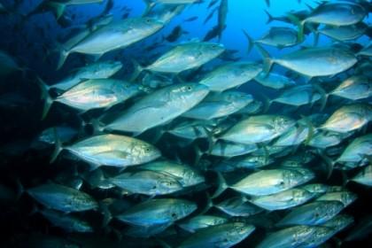 Mâncarea de origine acvatică poate reprezenta soluția împotriva schimbărilor climatice și a malnutriției