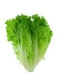 Salată verde (lăptucă)