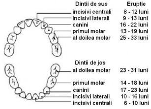 Dentitia sugarului