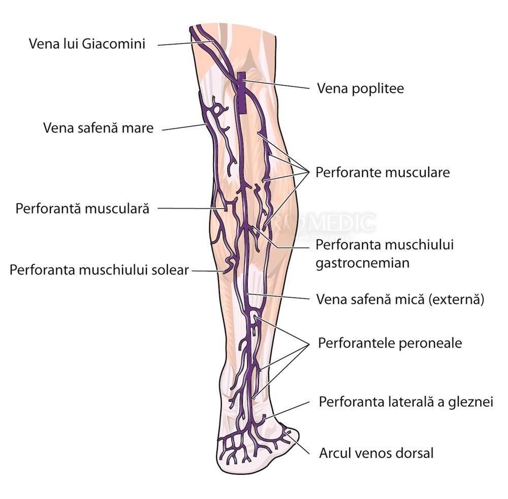 venele piciorului și gleznei