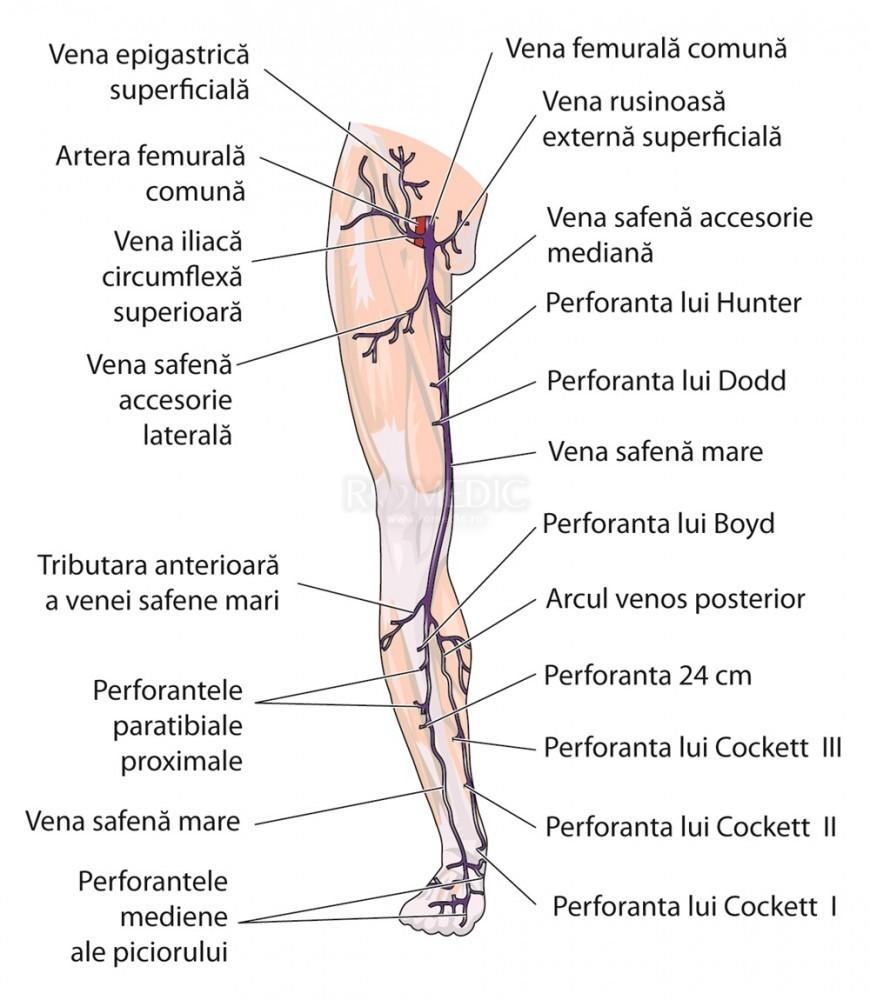 Fein Links Brachiocephalic Vene Ideen - Anatomie Ideen - finotti.info
