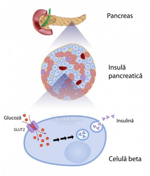 Pancreasul - Insulina