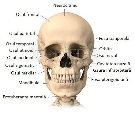 Oasele craniului - vedere anterioara
