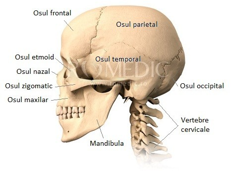 Oasele craniului - vedere laterala