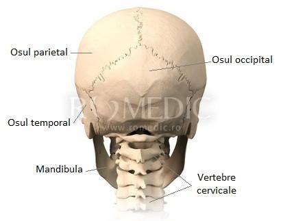 Oasele craniului - vedere posterioara
