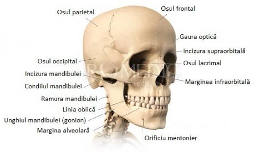 Oasele craniului - vedere ventro-laterala