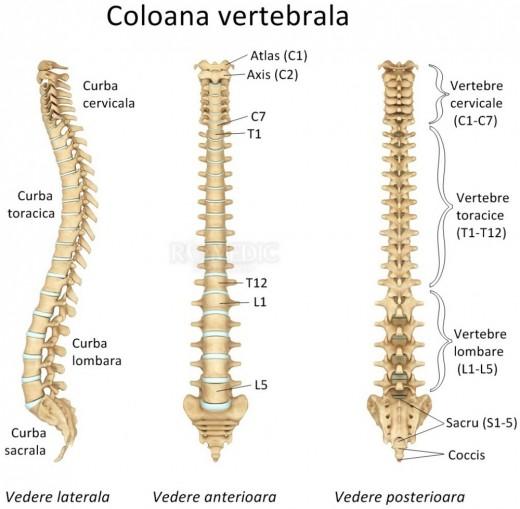 Coloana vertebrală