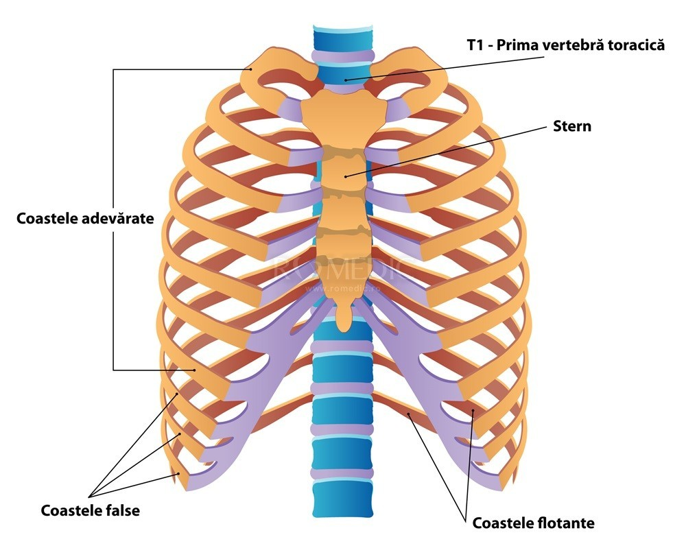 Durerea de spate | Cauze, simptome si tratamentul durerilor de spate | CENTROKINETIC