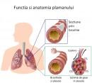 Functia si anatomia plamânului