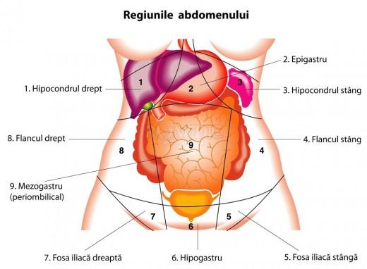 Regiunile abdomenului