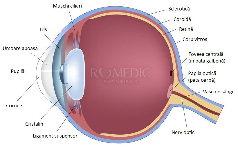 semnificațiile ochiului și viziunii umane)