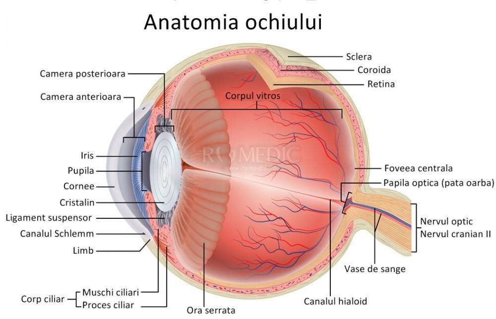 anatomie de lectură a organului vederii)