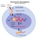 Hormonii steroidieni