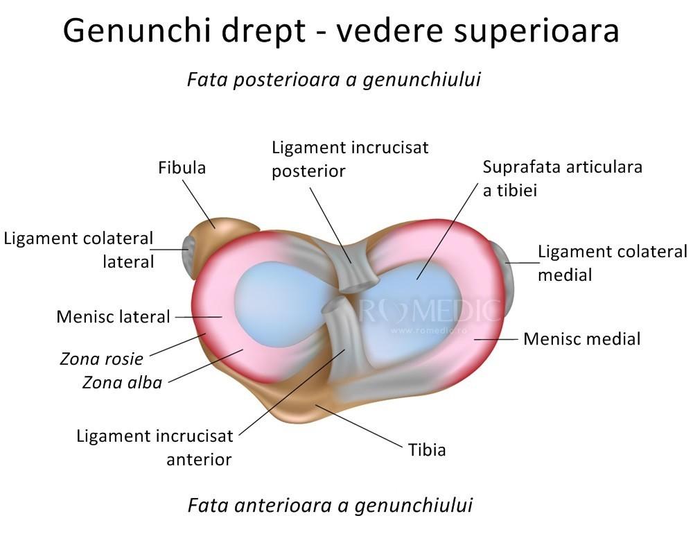 cum se vindecă articulația genunchiului)