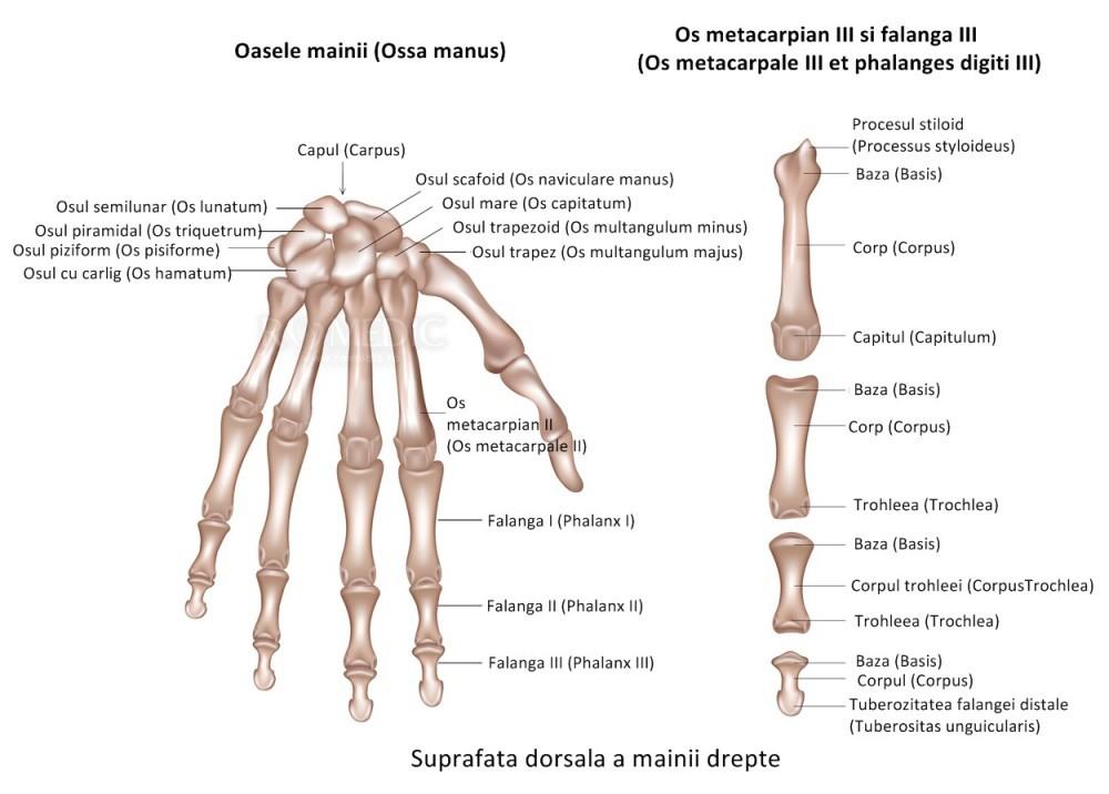 articulațiile interfalangiene pe mâini doare)