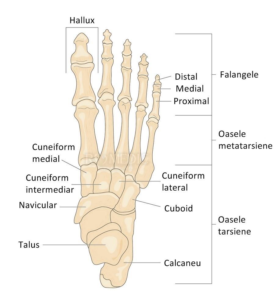 Durere în articulația piciorului piciorului drept