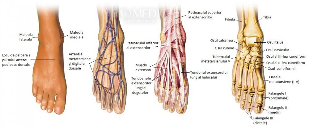 venele păianjen vor dispărea singure durere la nivelul picioarelor superioare la ridicarea picioarelor
