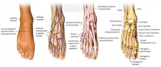 Piciorul