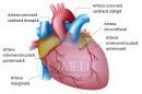 Vascularizatia inimii